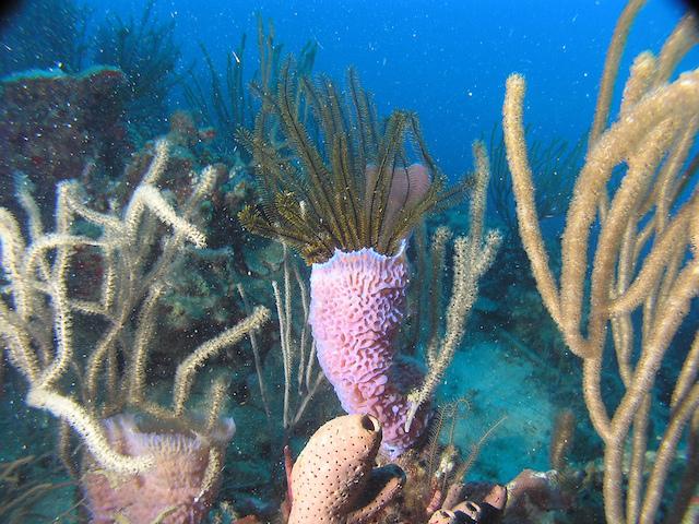 Marine-Life-Martinique