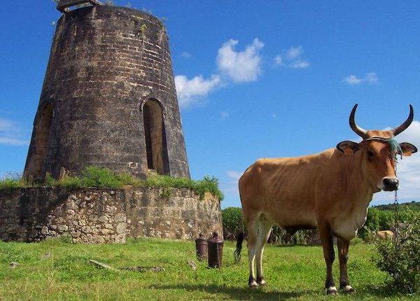 marie-galante-100-windmills
