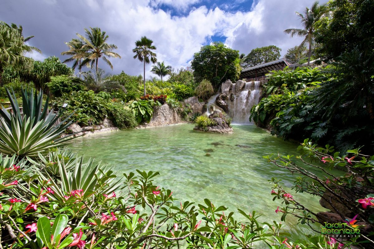 Botanical garden deshaies prestige villa rental travel guide for Jardin botanique guadeloupe