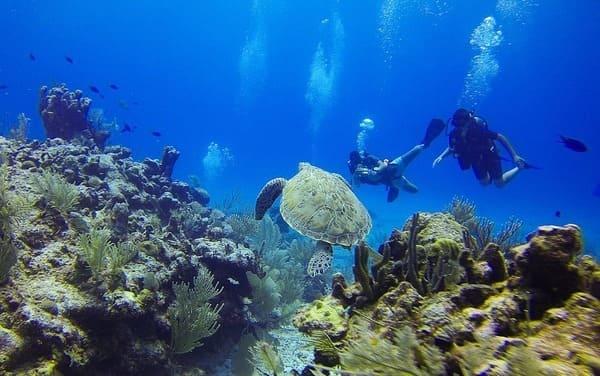 Marin Plongée Martinique Prestige Villa Rental Travel Guide